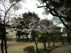 桜満開!!(社長のつぶやき103)